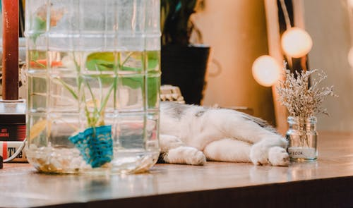 Immagine gratuita di acqua, animale domestico, arredamento, bicchiere