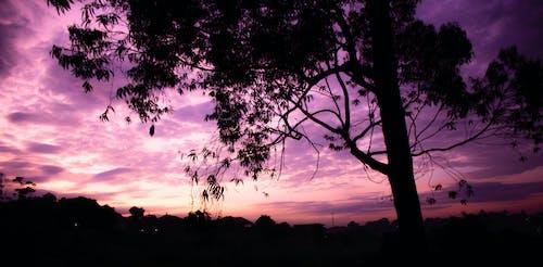 アフリカ, 早朝の無料の写真素材