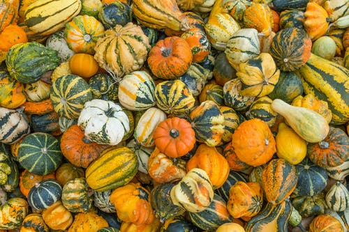 Fotos de stock gratuitas de calabazas, colores de otoño, muchos