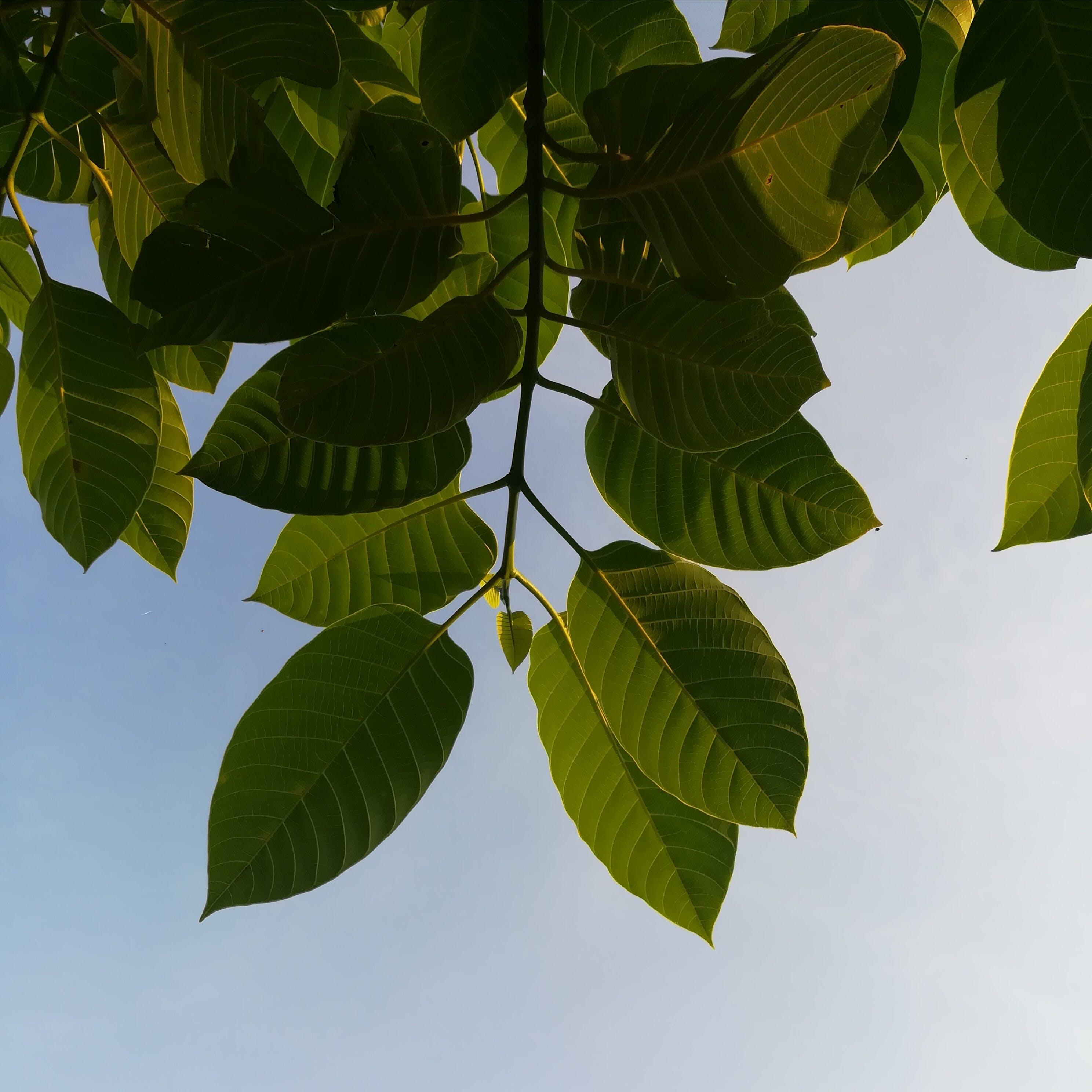 庭園, 成長, 新鮮な, 木の無料の写真素材
