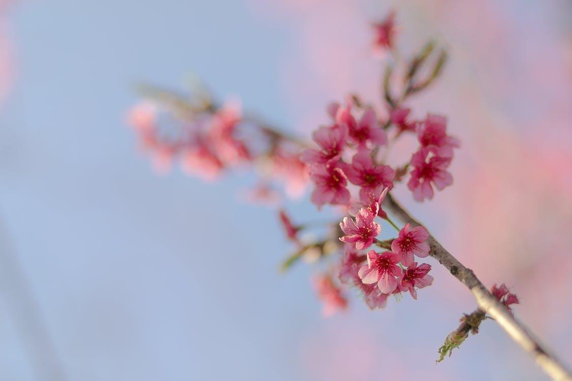 cận cảnh, cánh hoa, cây