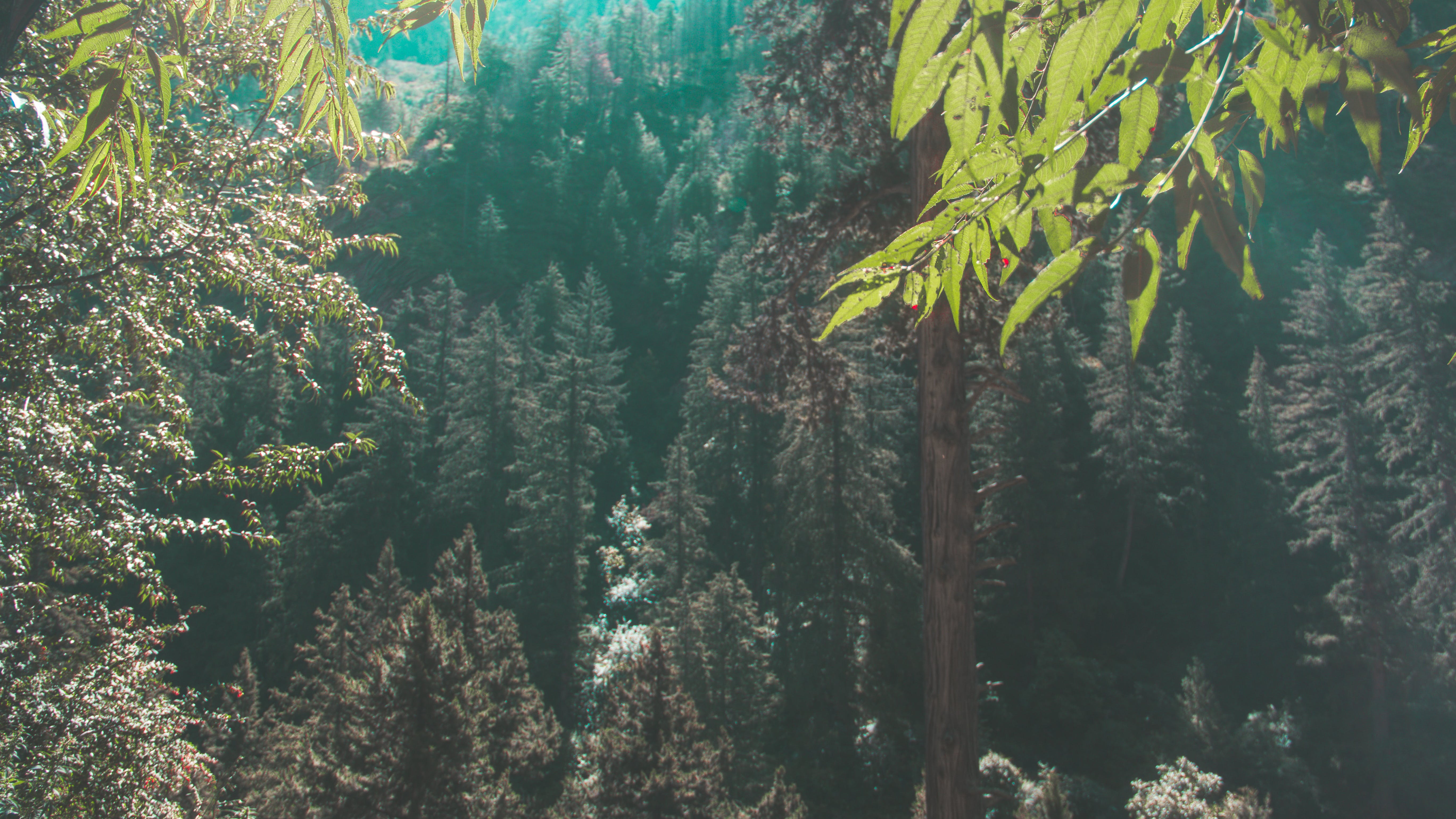 Free stock photo of blue water, deep, forest, glacier