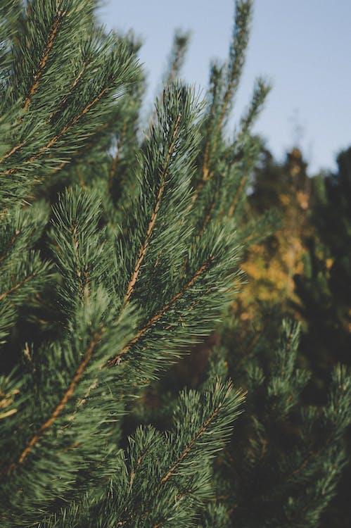 açık hava, ağaç, bitki