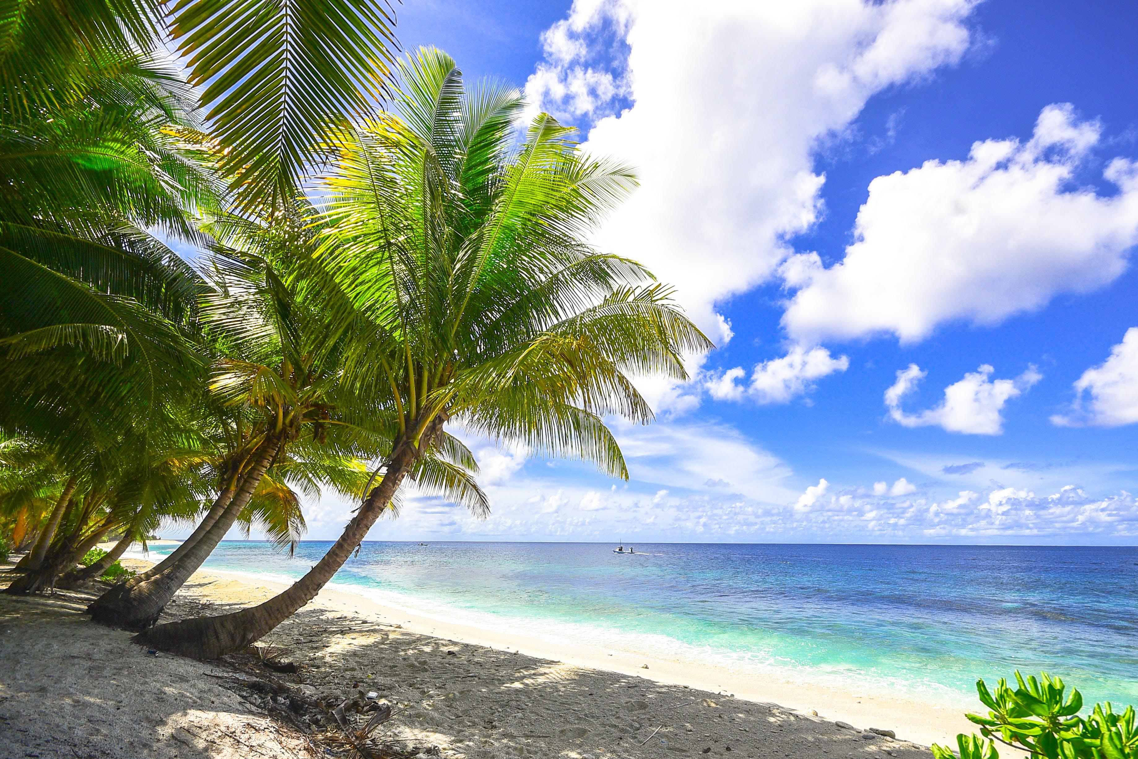 パラダイス, ビーチ, ヤシの木, リゾートの無料の写真素材