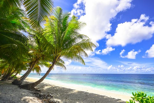 Δωρεάν στοκ φωτογραφιών με ακτή, άμμος, γνέφω, δέντρα