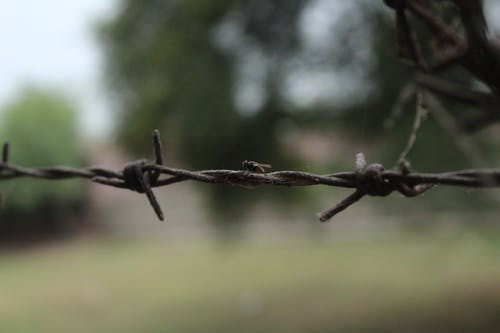 イエバエ, 自然写真の無料の写真素材