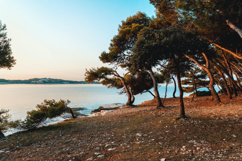 Бесплатное стоковое фото с вода, деревья, дневной свет, живописный