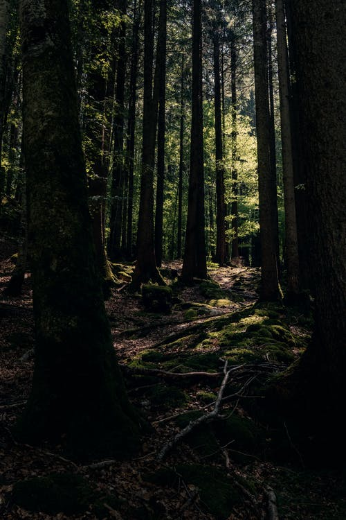 Ảnh lưu trữ miễn phí về ánh sáng ban ngày, cây, danh lam thắng cảnh, màu xanh lá