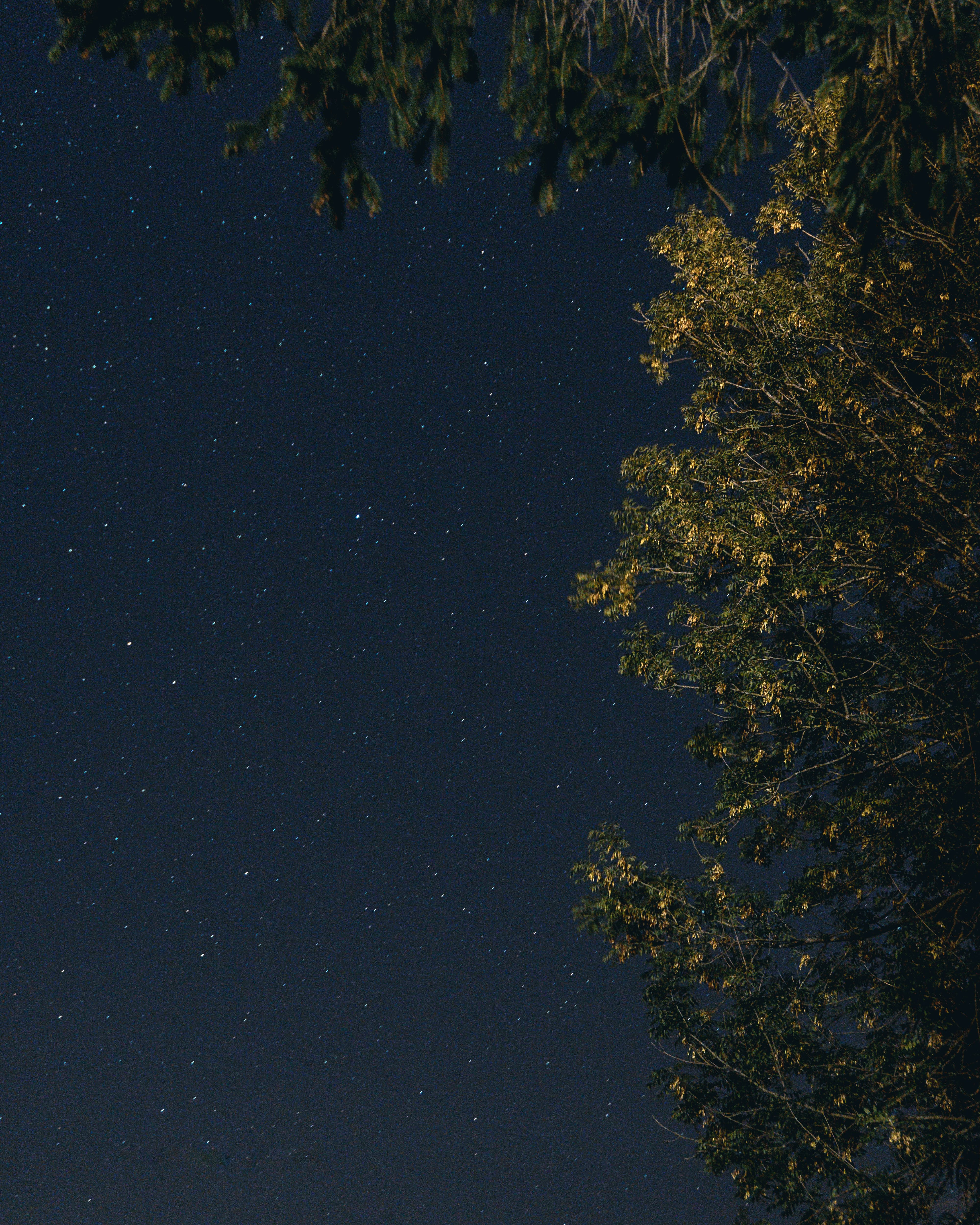 Free stock photo of astrophotography, night, stars, trees