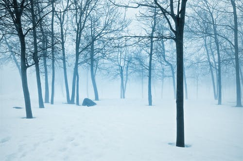 Free stock photo of blue, cold, fog, mist