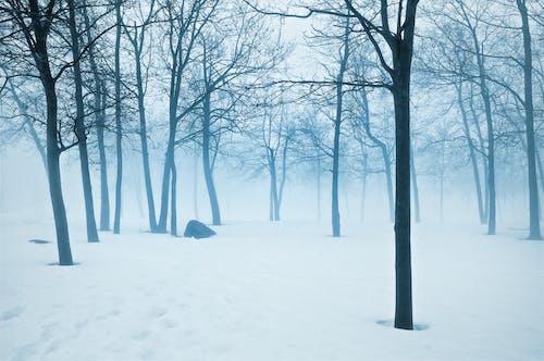 Бесплатное стоковое фото с голубой, деревья, зима, мистический