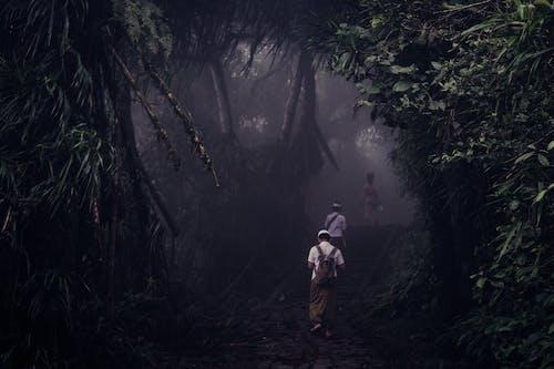 Fotobanka sbezplatnými fotkami na tému dažďový prales, denné svetlo, exteriéry, hmla