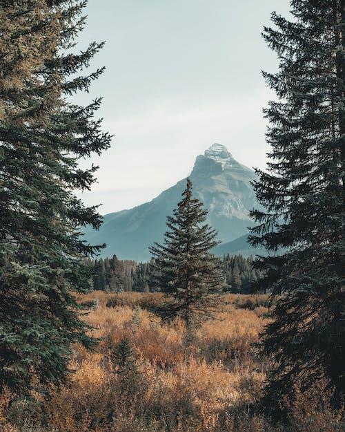 Безкоштовне стокове фото на тему «блакитне небо, види, гора, Денне світло»