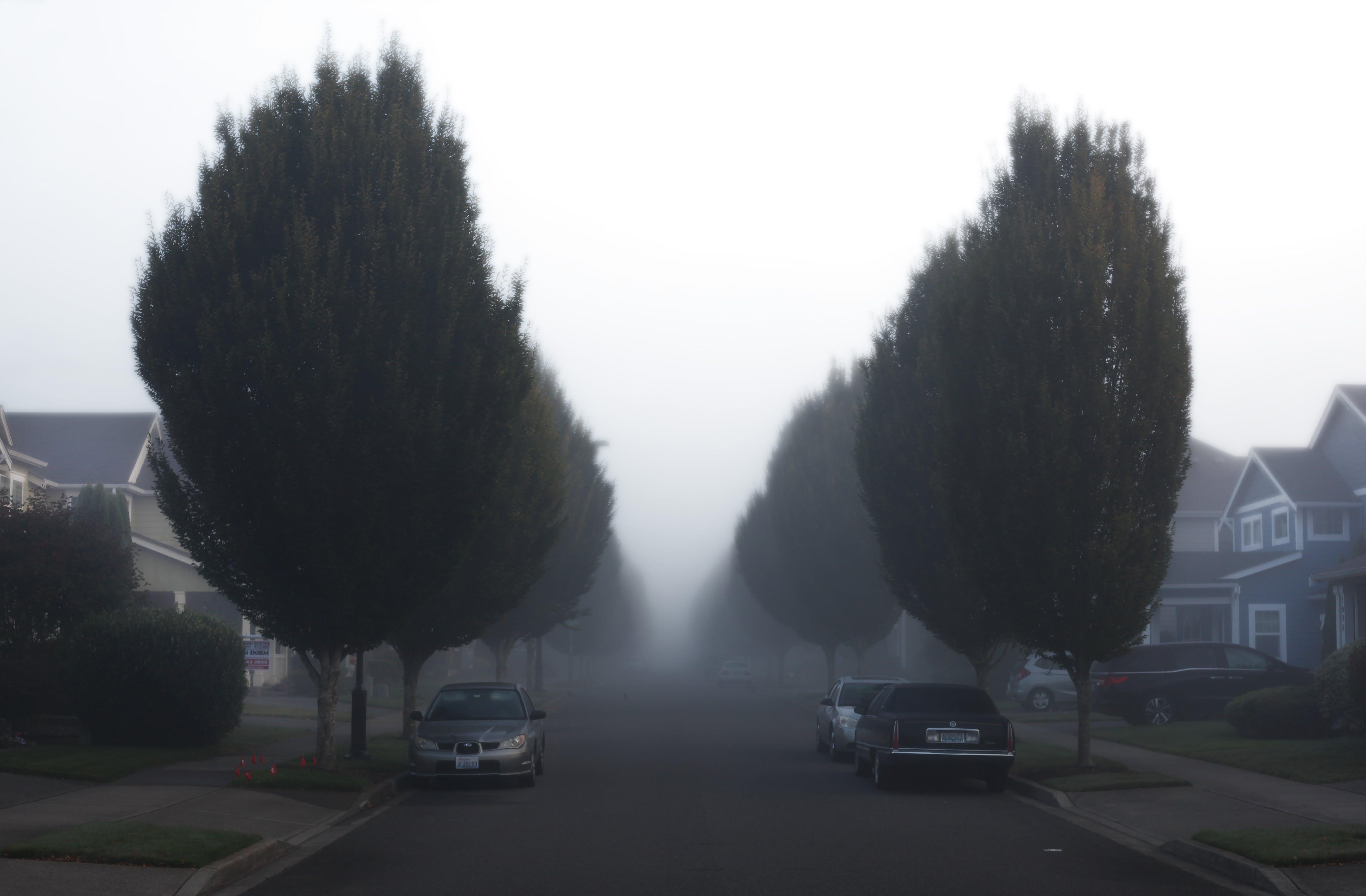 คลังภาพถ่ายฟรี ของ กลางวัน, จอด, ต้นไม้, ถนน