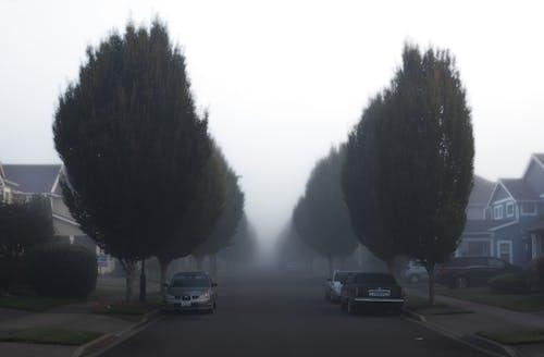 ağaçlar, arabalar, çevre, doğa içeren Ücretsiz stok fotoğraf