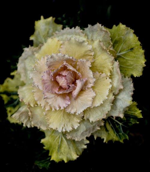 Immagine gratuita di bocciolo, colori, fiore, fioritura