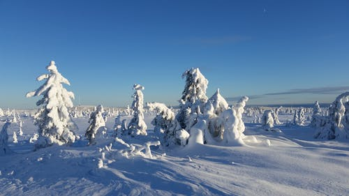 겨울, 겨울 원더 랜드, 노르웨이, 눈의 무료 스톡 사진