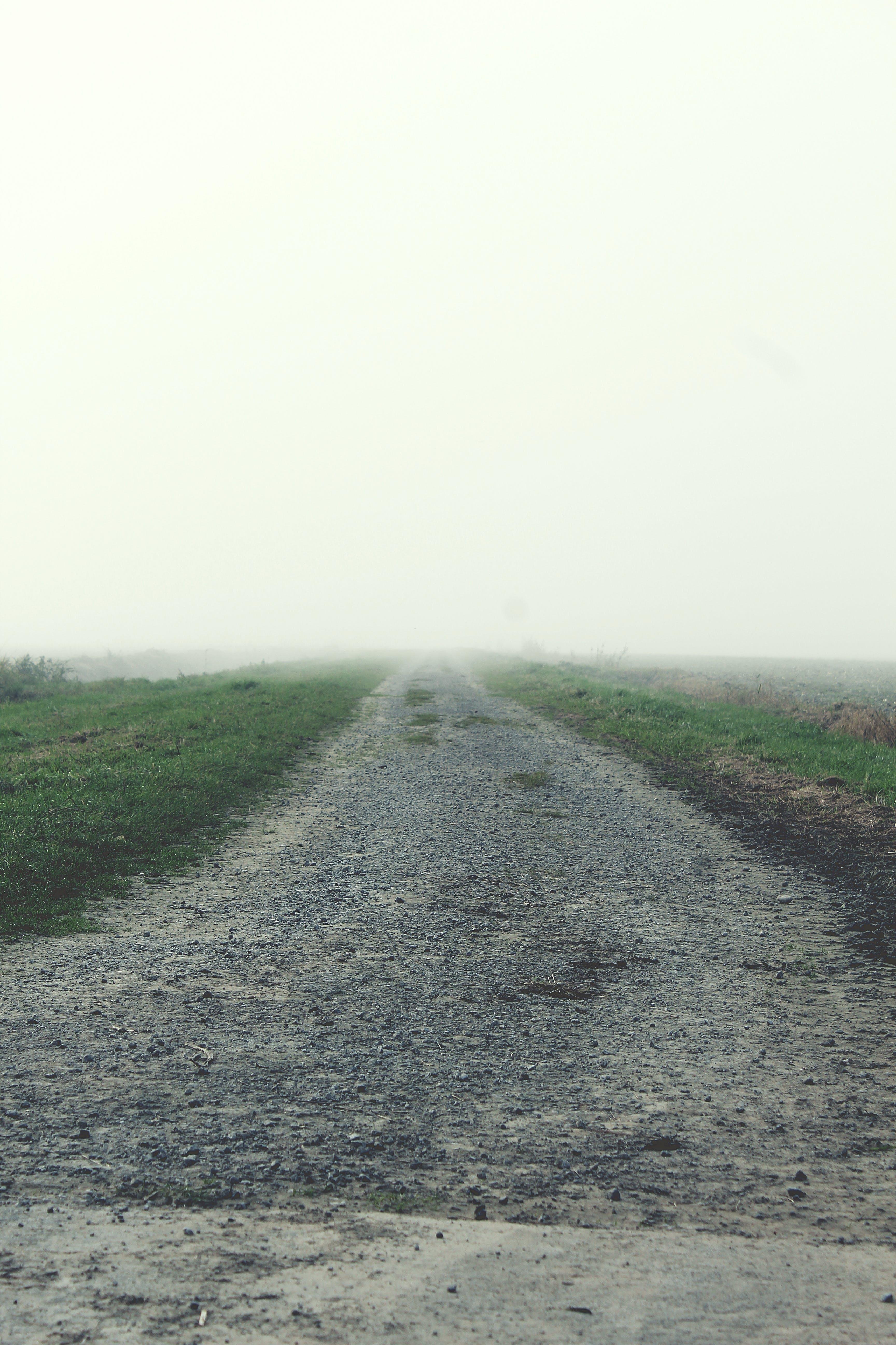 Free stock photo of natur, nebel