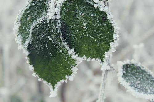 Fotobanka sbezplatnými fotkami na tému chladný, detailný záber, mráz, počasie