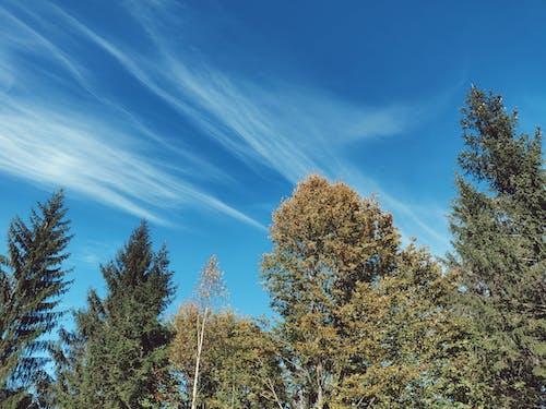 Kostenloses Stock Foto zu bäume, draußen, farben, hell