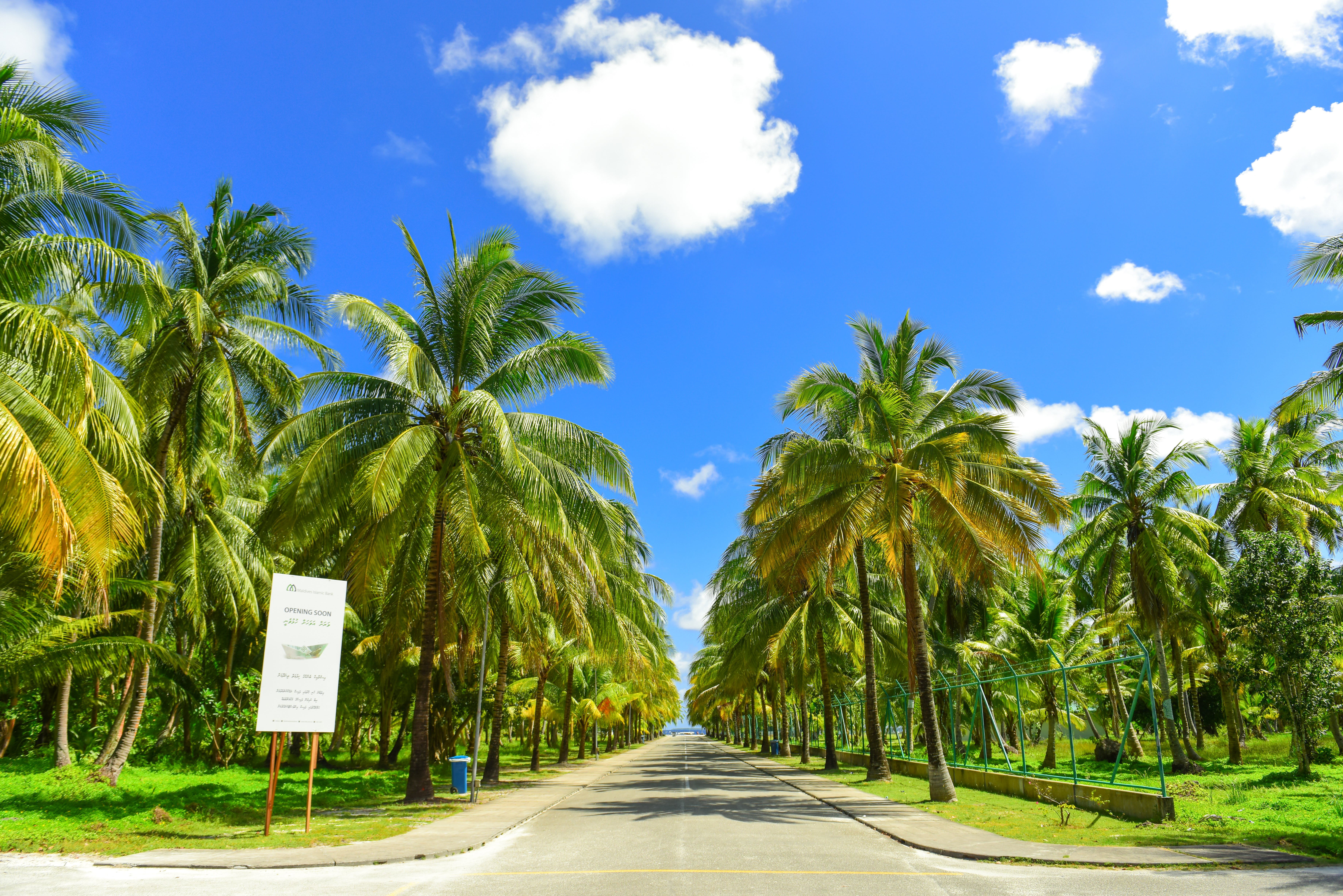 Gray Concrete Road Between Palm Trees