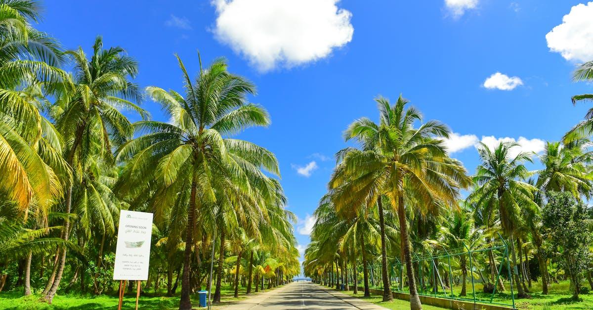 фото дорога пальмы процессе