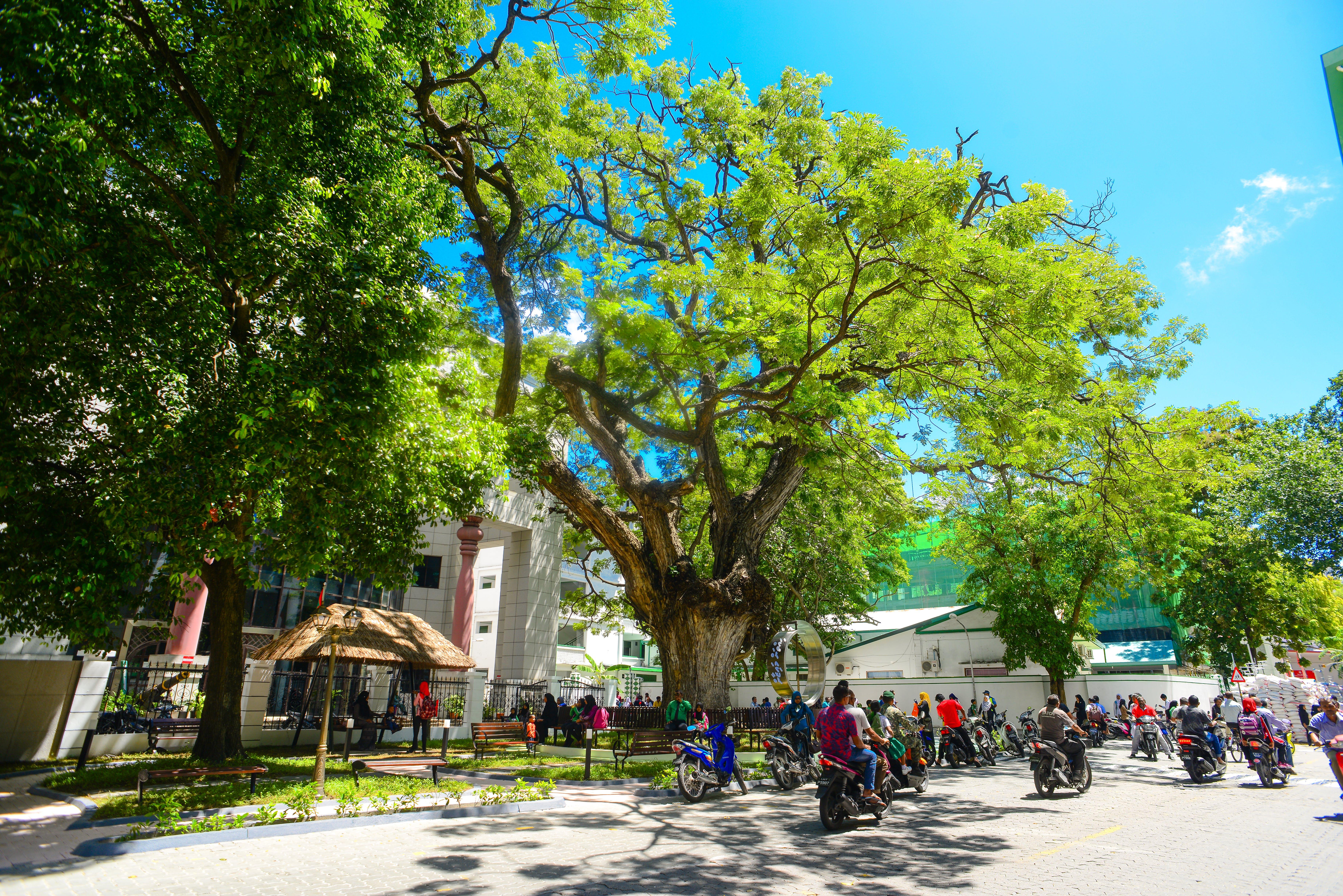 Gratis stockfoto met architectuur, bomen, dag, daglicht