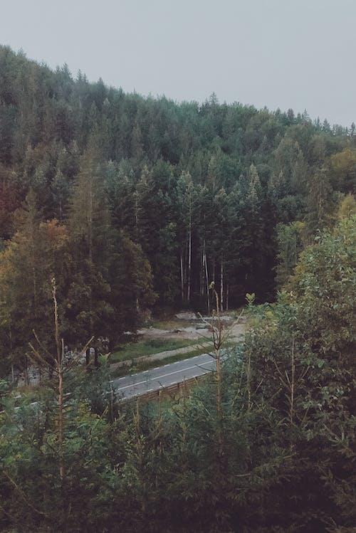 Asphalt Road in Between Trees