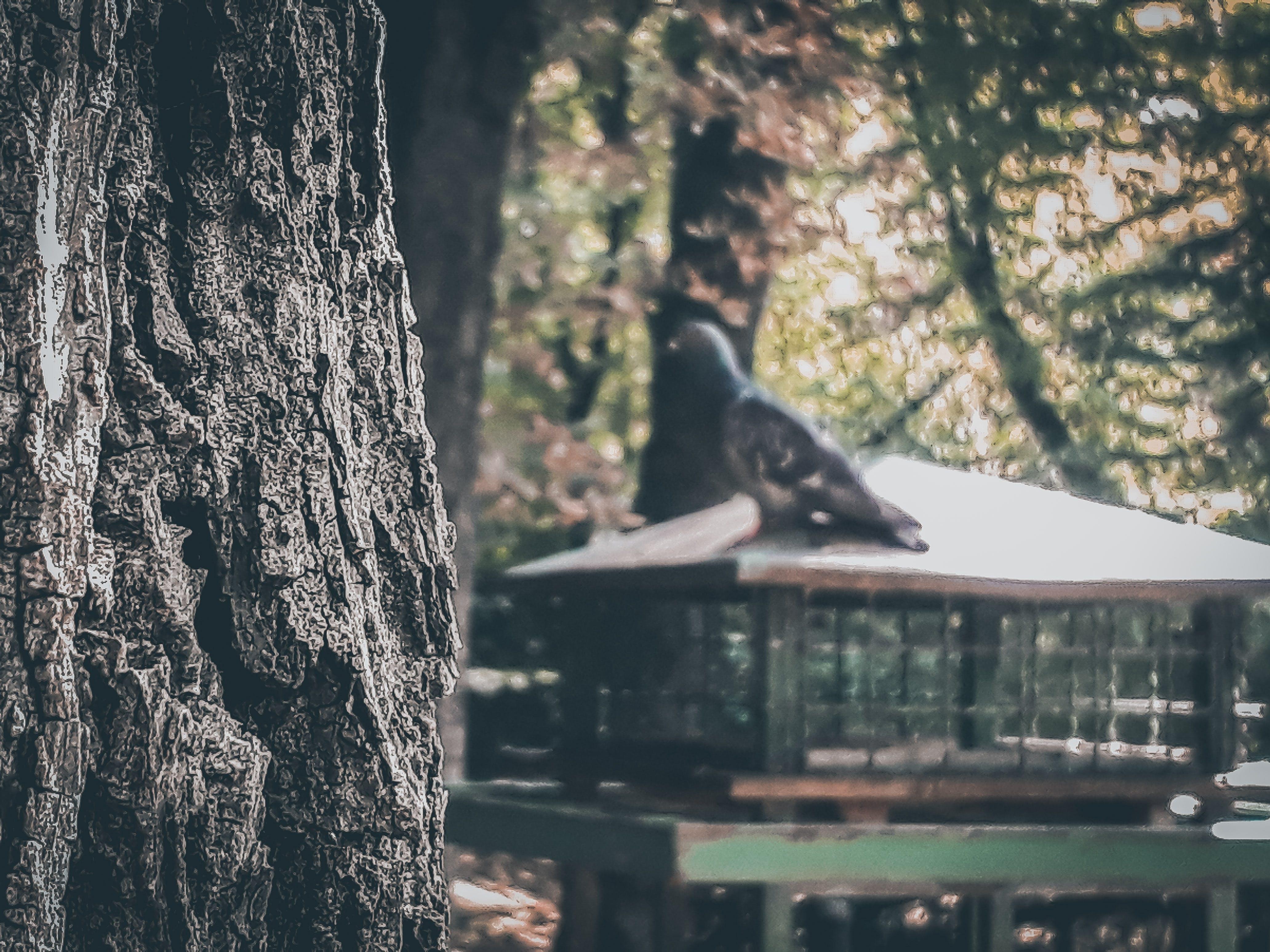 Δωρεάν στοκ φωτογραφιών με δέντρο, θολούρα