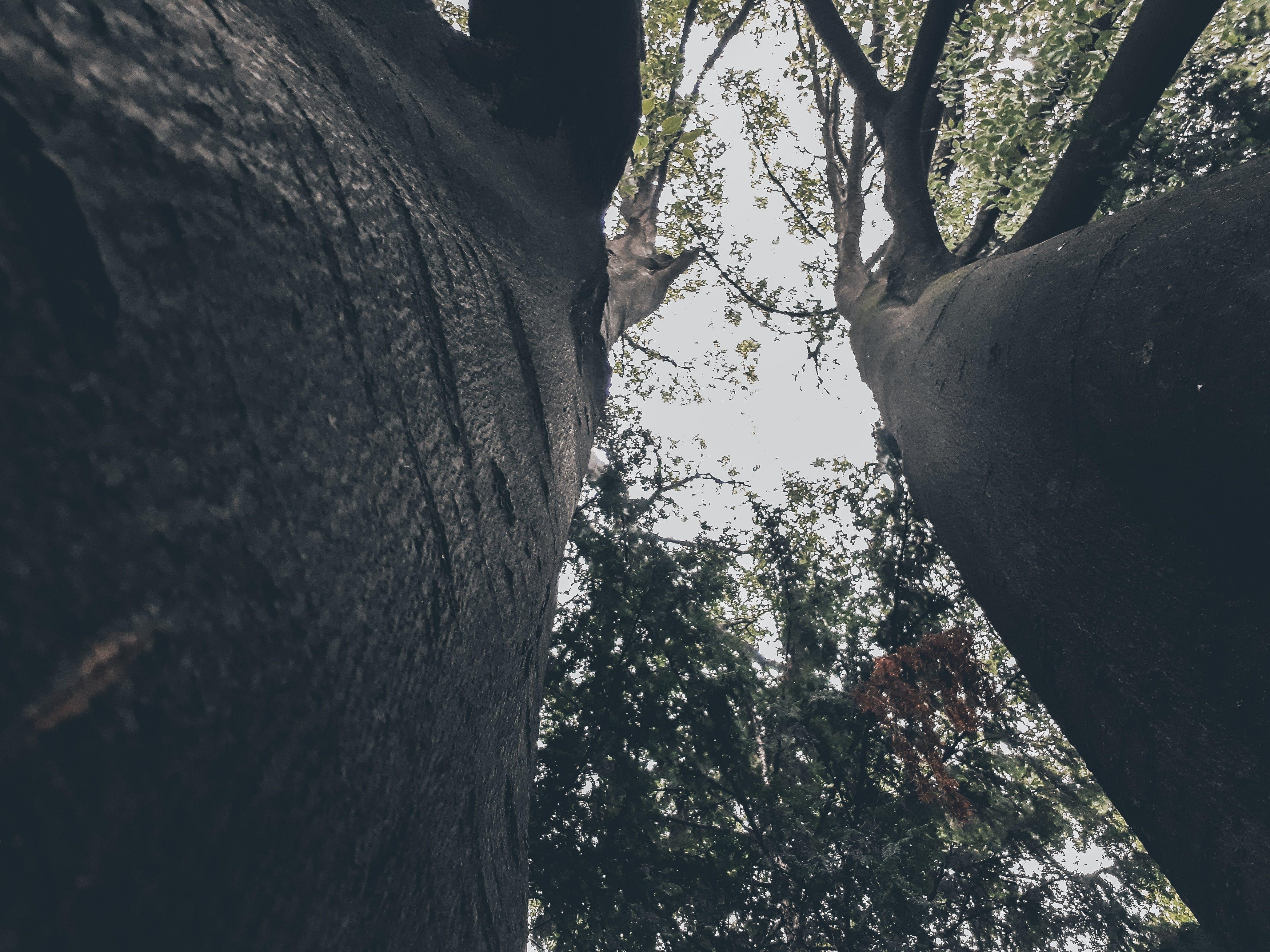 Δωρεάν στοκ φωτογραφιών με δέντρα, προοπτική, Συναισθηματικός, ψάχνω