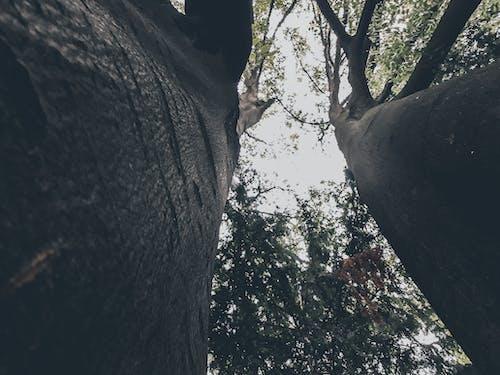 Photos gratuites de arbres, chercher, émotif, perspective