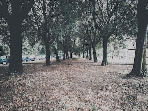 Photos gratuites de alignement, arbres, cinématique, emtional