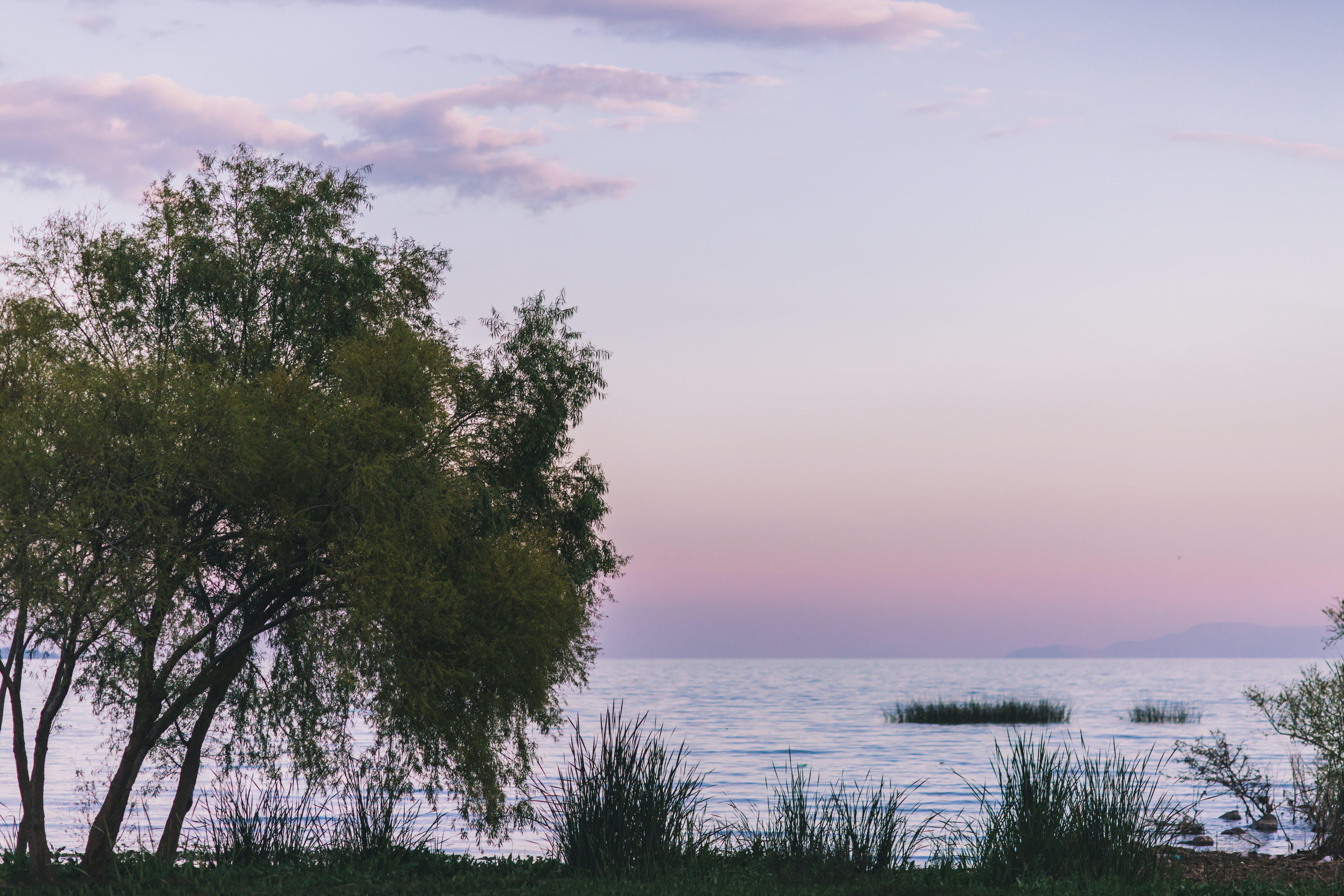 Kostenloses Stock Foto zu #lake #purple # rosa