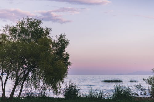 Free stock photo of #lake #purple #pink