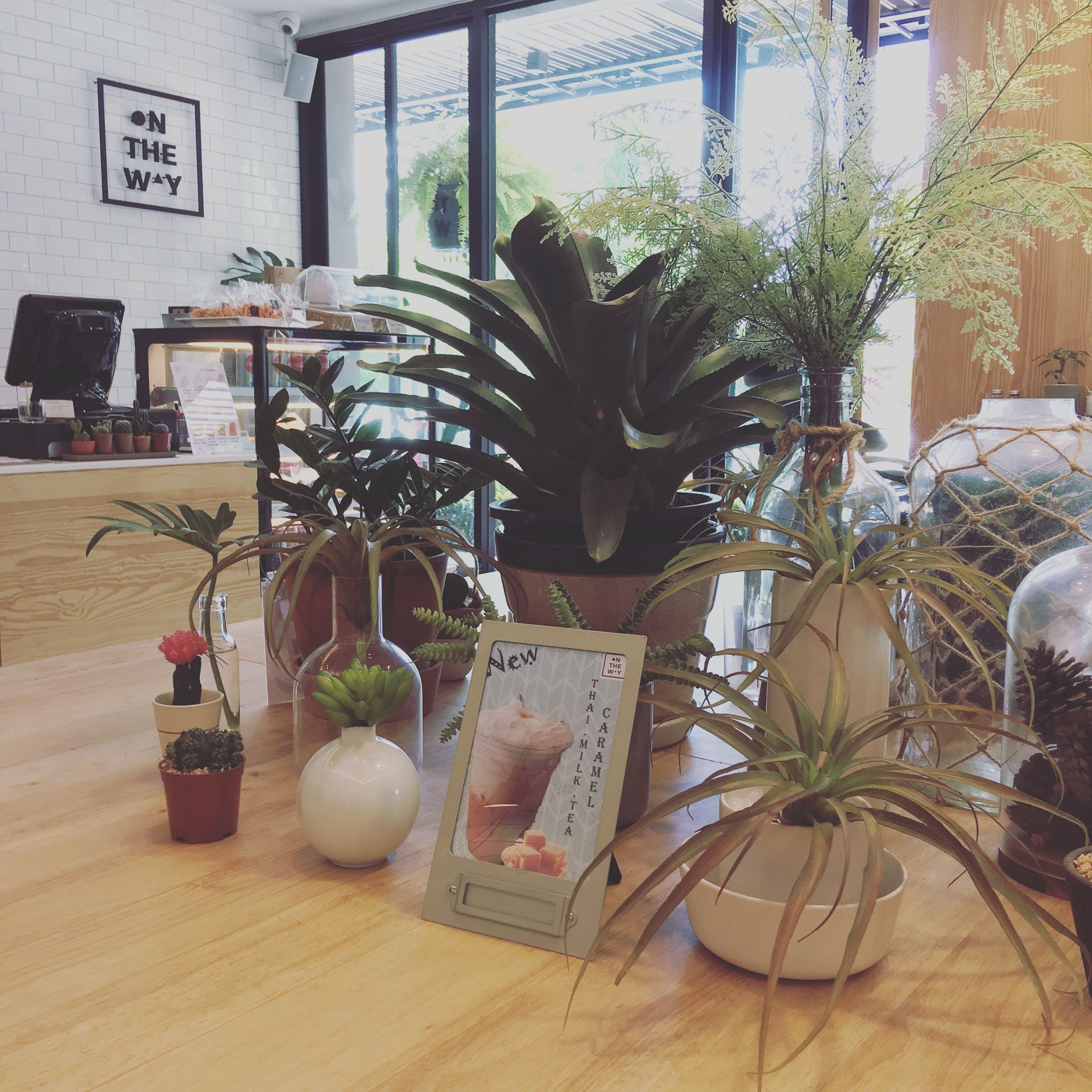 Free stock photo of café, coffee shop, cozy, nature