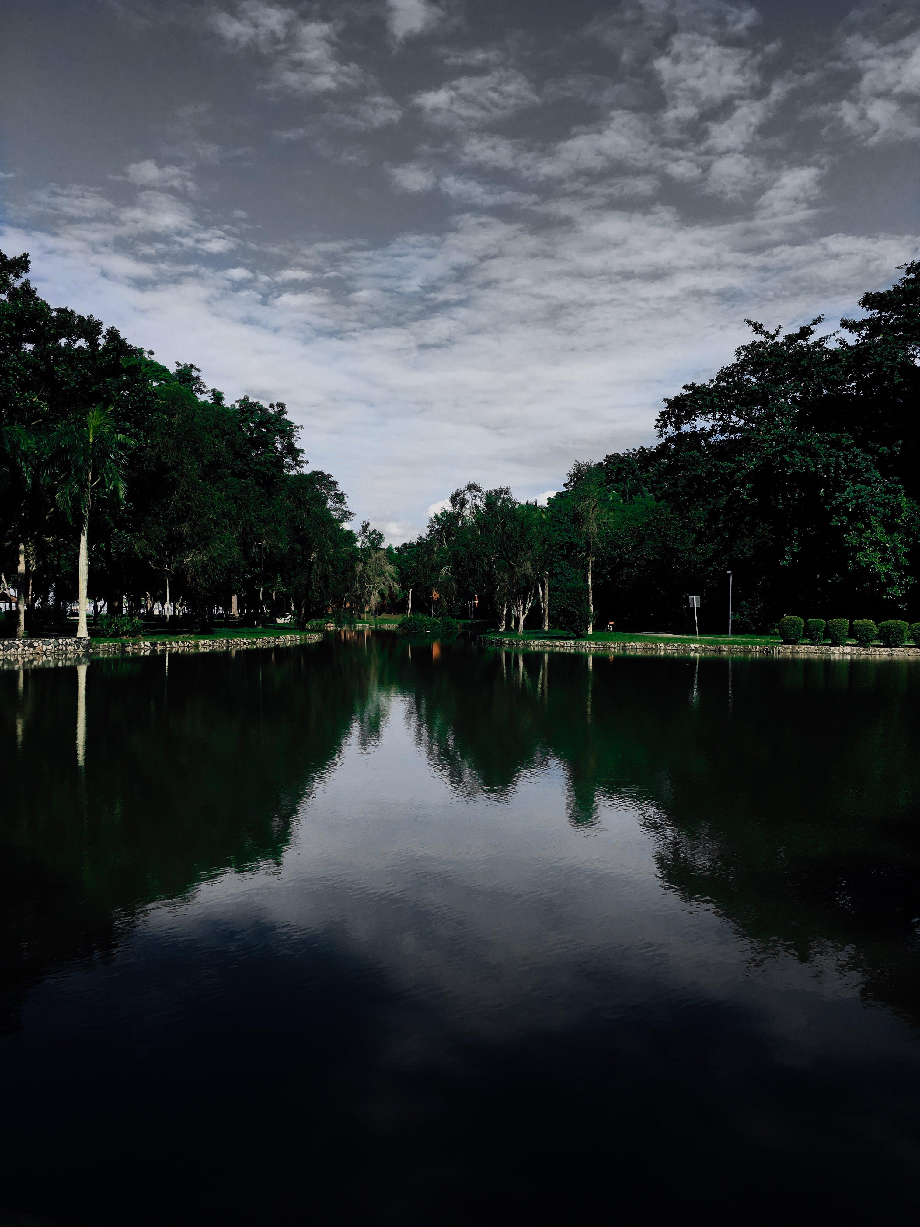 Kostenloses Stock Foto zu abend, bäume, dämmerung, himmel