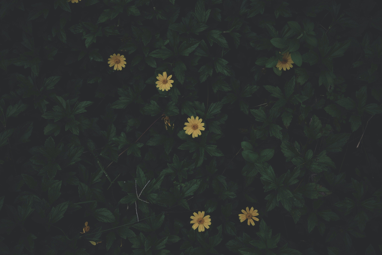 Gratis arkivbilde med 4k-bakgrunnsbilde, blomster, blomsterbakgrunnsbilde, blomsterblad