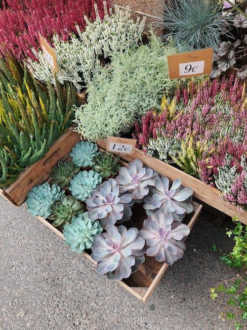 Imagine de stoc gratuită din botanic, centrale, creștere, decorațiune