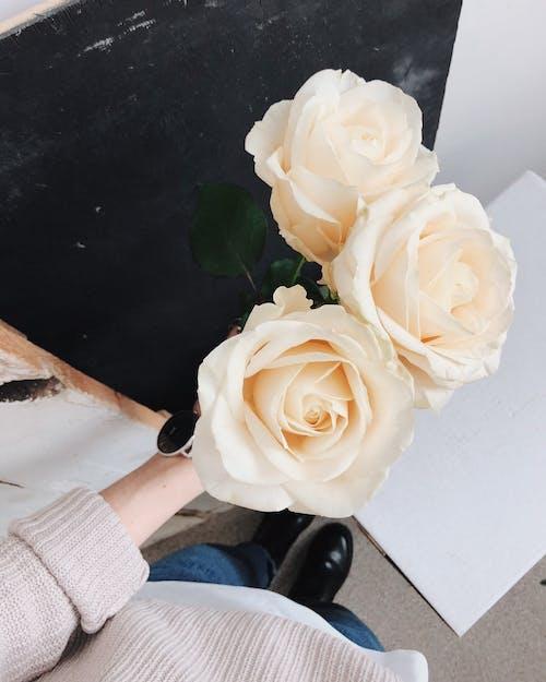Darmowe zdjęcie z galerii z delikatny, flora, kwiat, kwiaty