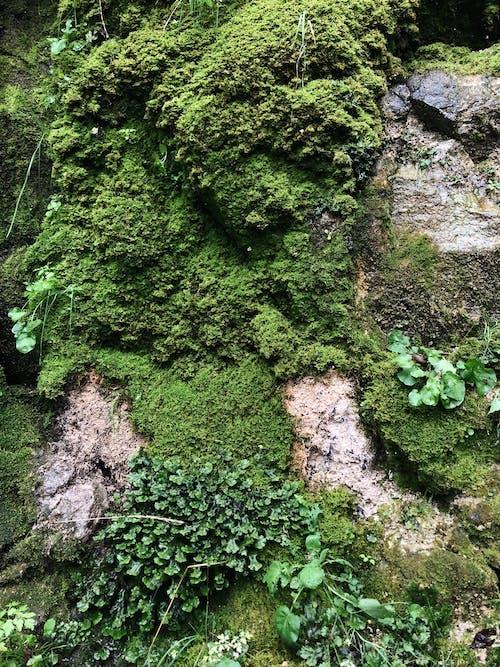 Photos gratuites de cailloux, couvert de mousse, croissance, envahi par la végétation