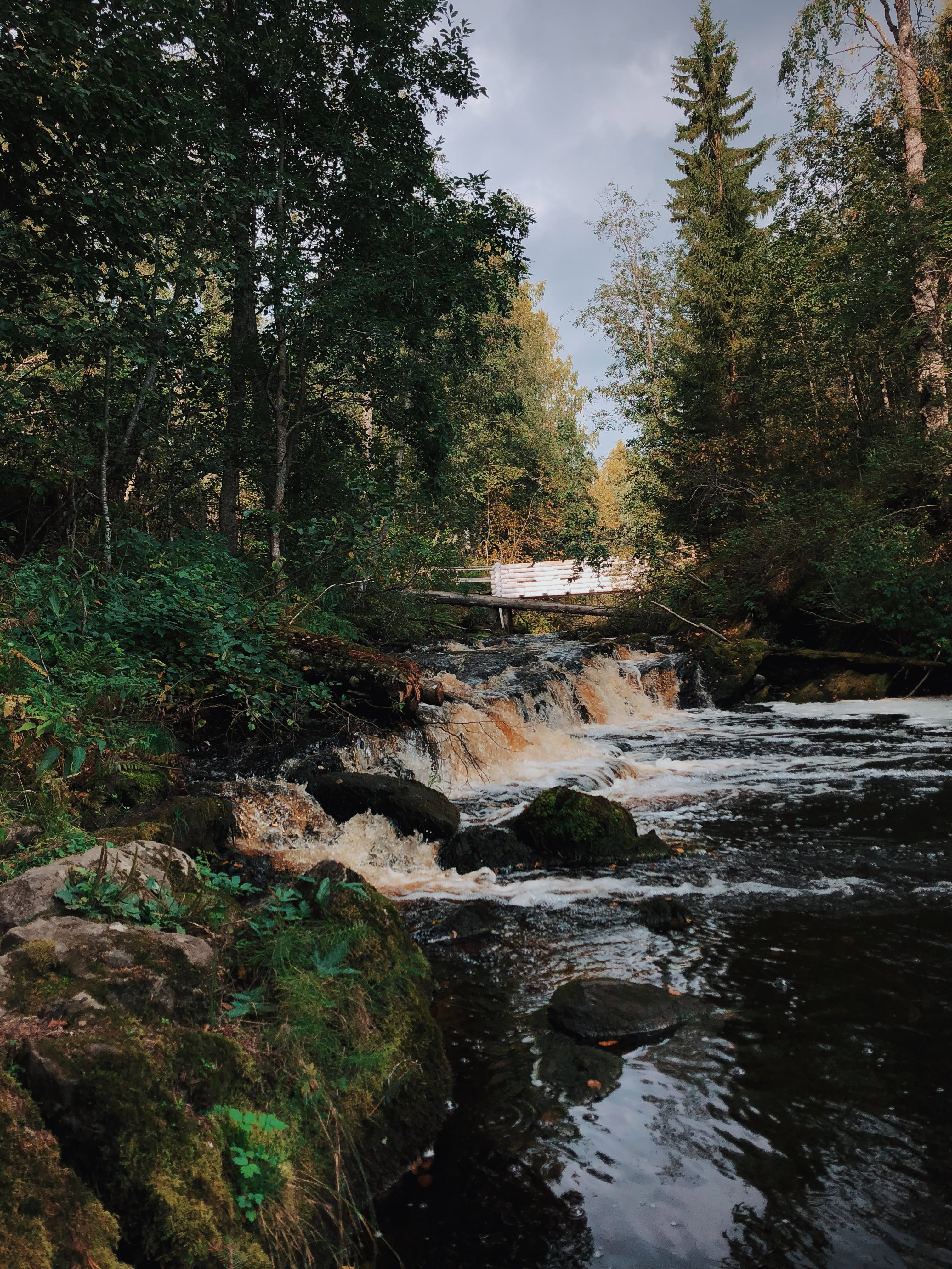 Time Lapse Photography of Flowing River Near Trees