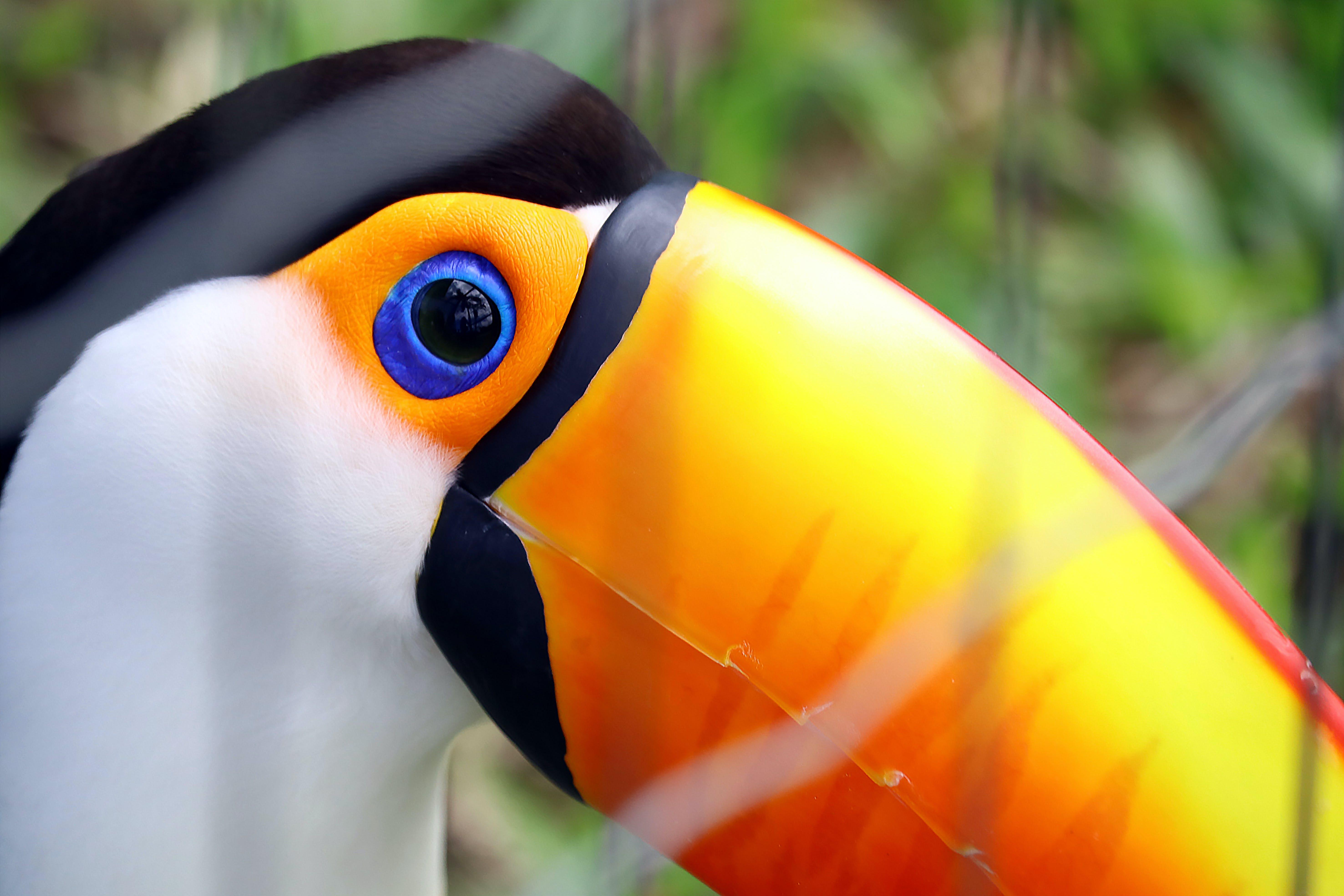 Kostenloses Stock Foto zu vogel, tier, schnabel, kopf