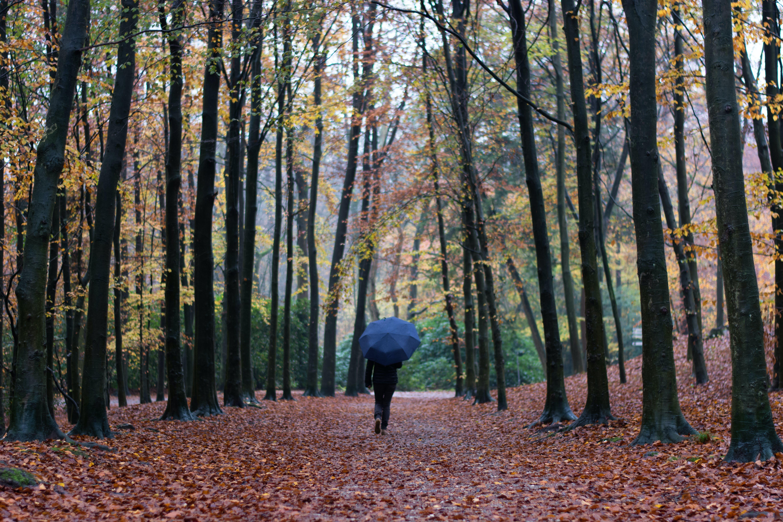 Immagine gratuita di alberi, ambiente, boschi, foglie cadute