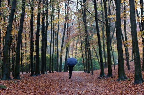 Základová fotografie zdarma na téma deštník, kmeny, kmeny stromů, krajina