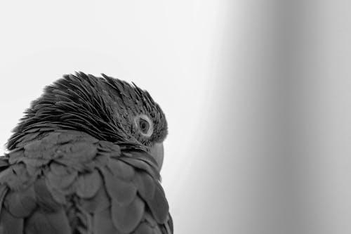 Fotobanka sbezplatnými fotkami na tému bitd, príroda, zelený papagáj