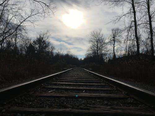 ağaçlar, demir yolu, Güneş, tren rayları içeren Ücretsiz stok fotoğraf