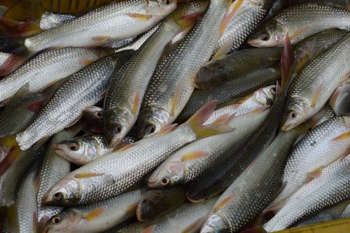 Free stock photo of betta fish, clown fish, crayfish