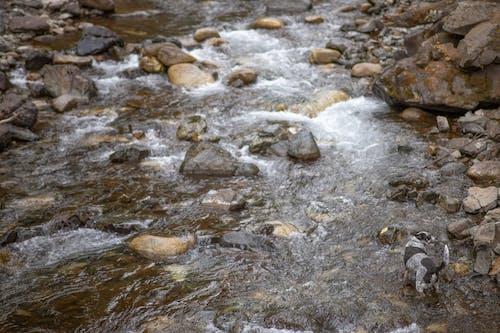 Free stock photo of dog, rocks, water, wilderness