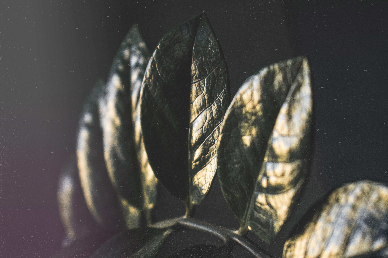 Kostenloses Stock Foto zu pflanze, verschwimmen, blätter, reflektierung