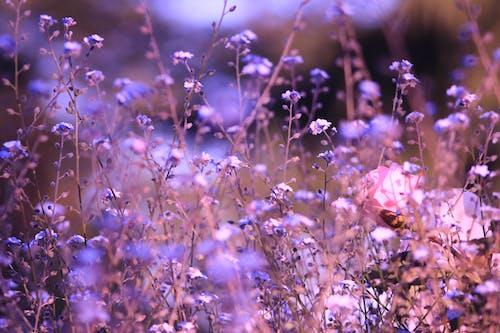 Бесплатное стоковое фото с природа, розовые цветы, росас, сад цветов